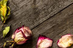 Stock Photo of Faded rose on wooden background