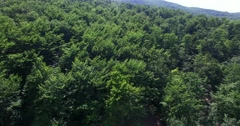 Flight over a forest of beech trees Stock Footage