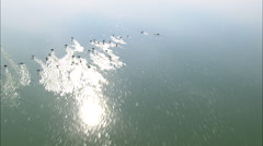 AERIAL United States-Birds On East Allen Lake - stock footage