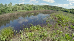 Thickets of a pond. Timelapse Stock Footage