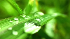 A large drop of rain lies on a stalk of grass Stock Footage