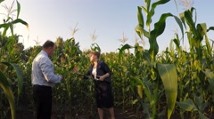 Stock Video Footage of A woman shows a chief agronomist agrofirm young corn field