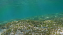 Sea Bottom with Water Grass Stock Footage