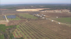 AERIAL United States-Flight With Pan Across Peach Tree Fields Stock Footage