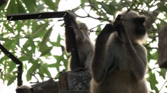 Family of monkey on a tree on wires Stock Footage