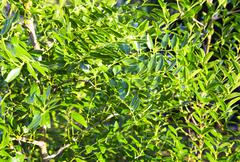 Stock Photo of Fresh green flora