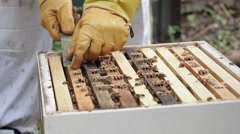Pulling out Honey bee macro footage of bee hive and apiarist beekeeper Stock Footage