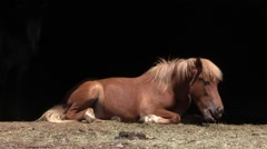 Horse laying down exhausted because of hot weather - Cicadas chirping Stock Footage
