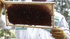 Stock Video Footage of Holding up Honey bee macro footage of bee hive and apiarist beekeeper