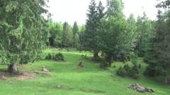 Hutsul region, deer in a meadow - stock footage