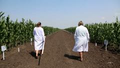 Two women check the growth of corn. The work of agronomists in the field Stock Footage