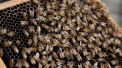Bee Hive macro footage of bees and honey production beekeeper Stock Footage