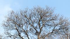 Stock Photo of leafless tree branches against the blue sky