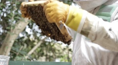 Looking at Honey bee macro footage of bee hive and apiarist beekeeper Stock Footage