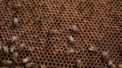 Cell Honey bee macro footage of bee hive and honey production beekeeper Stock Footage
