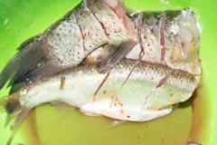 Purified fish on green blackboard Stock Photos