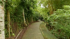 Variety of tropical plants at rainforest park, walk along pathway at green area Stock Footage