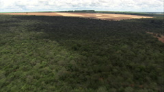AERIAL Brazil-Approaching Harvesting, Minas Gerais State Stock Footage
