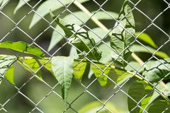 Plant for the metal fence on nature Stock Photos
