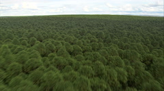 AERIAL Brazil-Low And Fast Over Tree Tops, Minas Gerais State Stock Footage