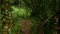 Walk through rainforest path, glide shot, exotic plants around Stock Footage