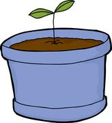 Stock Illustration of Seedling Growing in Pot