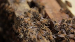 Closeup Honey bee macro footage of bee hive and honey production beekeeper Stock Footage