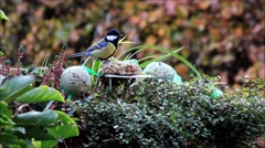 Blue and great tit and sparrow, winter, fodder, nuts Stock Footage