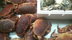 Alive Crabs For Sale At Fish Market in Birmingham uk - stock footage