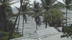 Choppy sea palm trees - stock footage