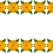 Zinnias flower frame isolated on white background - stock illustration