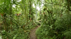 Move on path tropical forest, lush vegetation, rich green and few red leaves Stock Footage