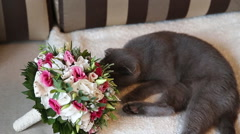 Cat sniffing weddibg bouquet Stock Footage
