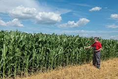 Agriculture, farmer in corn field - stock photo