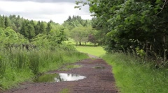 Wet road in the forest, summer time, Scotland, HD footage Stock Footage