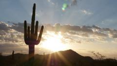 Glorious Sun Rays Behind Cactus Stock Footage
