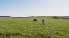 Man Photographing Buffalo- Wichita Mountains- Lawton OK Stock Footage