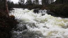 Wild spring stream flows through taiga forest Stock Footage