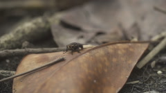 Fly rotates flies away - stock footage