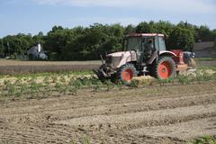 Farm workers laying straw as a mulch for young tomato plants Long Island USA - stock photo