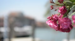 Embankment and pier in Venice, on the island of Murano - boats and flowers Stock Footage