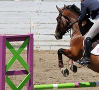 Bay horse with rider jumping over fance - stock photo