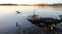 Lost force pike lies on the shallow shore Stock Footage