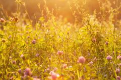 Magic summer majestic sunshine golden yellow grass meadow field Stock Photos