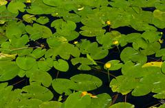 Stock Photo of Some aquatic plants that grow in the wild.