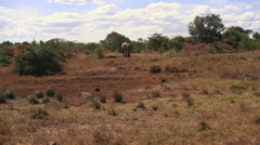 Elephant in rural remote Kenya savannah, Africa wildlife, long shot Stock Footage