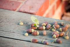 Acorns - stock photo