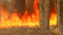 Beautiful flame of fire in the forest. Stock Footage