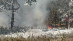 Extinguished the fire in the woods, on a grass fire-fighting foam. Stock Footage