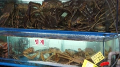 Aquatic animal in showcase for sale at Noryangjin Fish Market - stock footage
